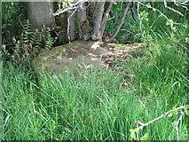 NZ6606 : Stone trod near Hunter Sty Bridge 3 by T  Eyre