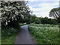 SK4934 : Hawthorn blossom and cow parsley by David Lally