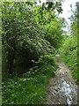 TF0820 : A wet path by Bob Harvey