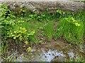 TF0820 : Oakish fecundity by Bob Harvey