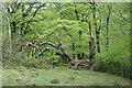 SO1806 : Fallen tree, Silent Valley LNR by M J Roscoe