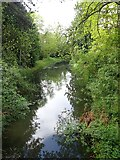 SP5077 : Brownsover Arm from bridge to Brownsover Hall by Rob Farrow