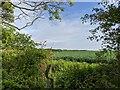 TF0821 : Through the hedge by Bob Harvey