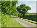 NZ3307 : Eryholme Lane by Gordon Hatton