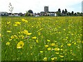 SO8932 : Buttercup on Tewkesbury Ham by Philip Halling