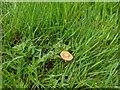 TF0820 : Fungus in the grass by Bob Harvey