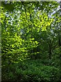 TF0820 : Bacaklit leaves by Bob Harvey