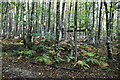 TQ8622 : Waymarkers, Flatropers Wood by N Chadwick