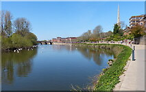SO8454 : Kleve Walk along the River Severn, Worcester by Mat Fascione