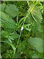 TF0820 : Cuckoo-spit on grass by Bob Harvey