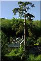 SX8362 : Castle Mill, Berry Pomeroy by Derek Harper