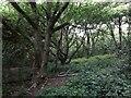 SE2338 : Hunger Hills woodland by Stephen Craven