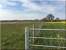 SP3666 : HS2 enabling works near Offchurch, April 2021 (5) by Robin Stott