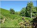 NY2725 : The slopes of Latrigg below Mallen Dodd by Adrian Taylor