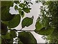 TF0820 : Leaf damage by Bob Harvey