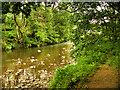 SD7915 : River Irwell, Summerseat by David Dixon