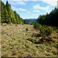 NH8202 : Clearing, Inshriach Forest by Mick Garratt