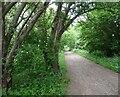 SO8695 : South Staffs Railway Walk by Gordon Griffiths