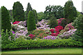 NZ0878 : Rhododendrons, Belsay Gardens by Ian Taylor