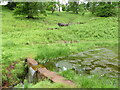 SO6102 : A little dam creating a boggy pond, Lydney Park Gardens by Ruth Sharville