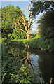 SO1122 : Dead tree by Monmouthshire and Brecon Canal by Derek Harper