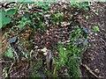 TF0820 : The end of a tree by Bob Harvey