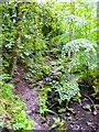 SE1506 : The Kirklees Way in Morton Wood, Hepworth by Humphrey Bolton