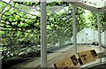 TQ1568 : The Great Vine & Greenhouse - Hampton Court Palace by Martin Tester