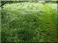 TF0820 : My long grass by Bob Harvey