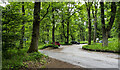 NN9941 : Rumbling Bridge car park by Trevor Littlewood