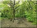 SE1739 : Bridleway through Buck Wood by Stephen Craven