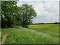 TL2771 : Hemingford Abbots - Railway Embankment by Colin Smith