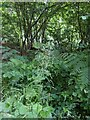 TF0820 : Grass flowers by Bob Harvey