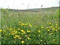 SD9966 : Meadow flowers alongside the Dales Way by Stephen Craven