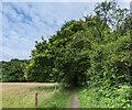 TF0820 : The Overhanging Oak by Bob Harvey