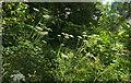 SX9065 : Path, Stantaway Hill by Derek Harper