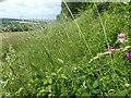 TQ5461 : Chalk grassland above Austin Lodge Golf Course by Marathon