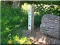 NY1969 : Classroom project marker post by Jim Barton