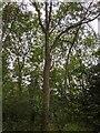 TF0820 : A spot on a tree by Bob Harvey