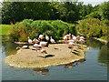 SO7204 : Andean Flamingos at Slimbridge WWT Centre by David Dixon