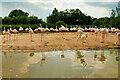 SO7104 : WWT Slimbridge Flamingo Lagoon by David Dixon