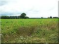 TM0235 : Farmland off the B1068 by Geographer