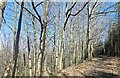 TQ7019 : Darwell Woods by PAUL FARMER