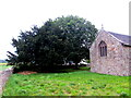 SO3404 : Yews in  All Saints churchyard, Kemeys Commander, Monmouthshire by Jaggery