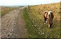 SX5673 : Ponies by the Dartmoor Way by Derek Harper