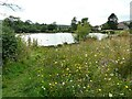 NS6278 : Wildflower meadow, Whitefield Pond by Richard Sutcliffe