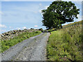 NY7856 : Farm access road for Harlow Bower by Trevor Littlewood