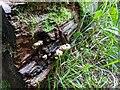 TF0820 : Yellow Fungus by Bob Harvey
