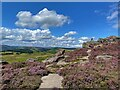 SK2480 : On Hathersage Moor by Graham Hogg