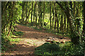 SX9266 : Track below model village by Derek Harper